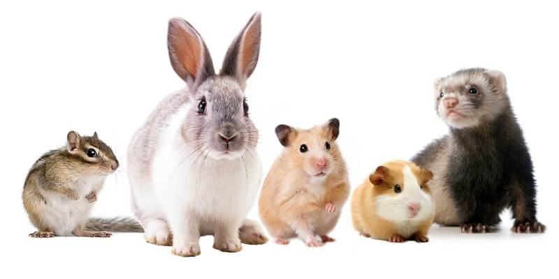 Nouveaux animaux de compagnie : plus de réglementation pour éviter les abandons
