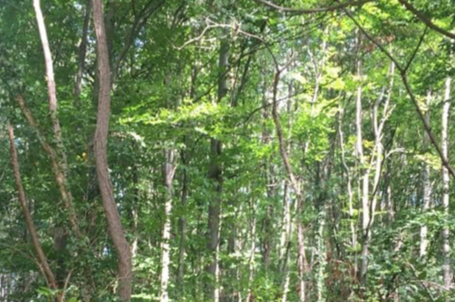 Le MR Bruxelles défend une proposition équilibrée pour protéger la forêt urbaine de la RTBF